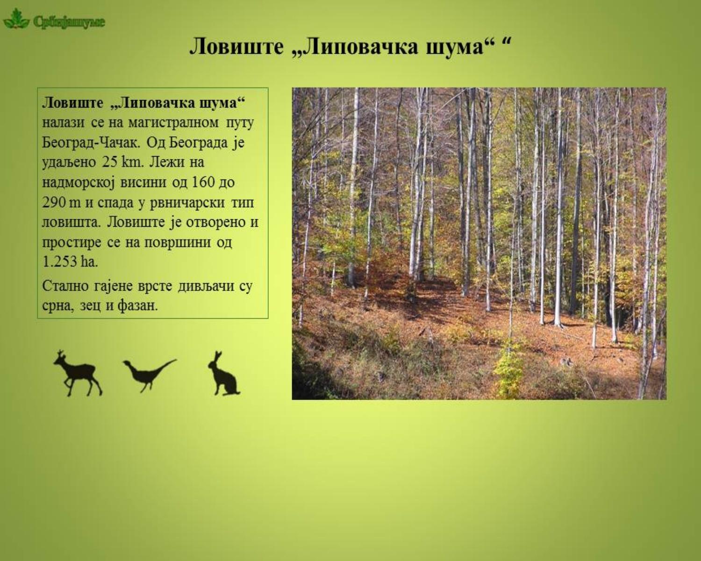 032a_lipovacka_suma_01.jpg - 458,02 kB