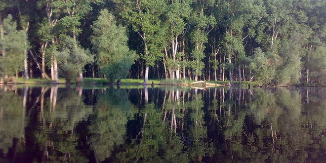 ekologija-priroda-dunav-suma-jpg_660x330.jpg - 128,49 kB